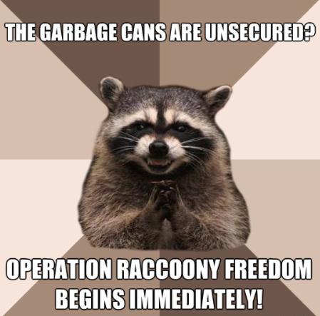 Raccoony Freedom Meme